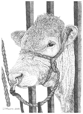 A pen and ink drawing of a bull with a ring in its nose by Leslie Moore of PenPets.