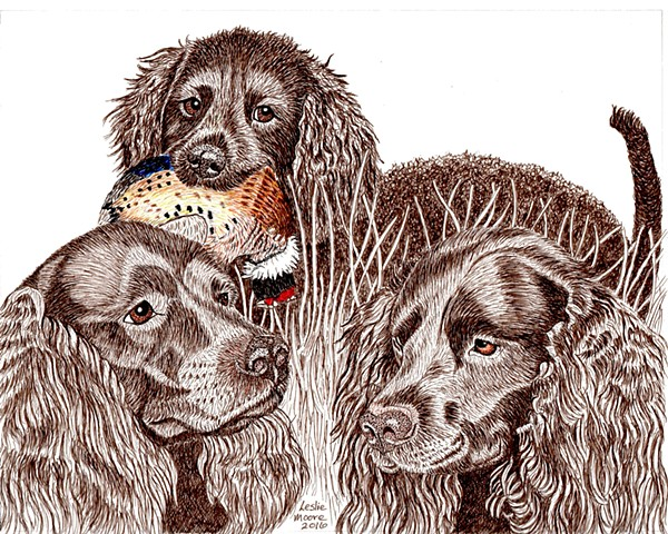 a colored pen and ink drawing of three American Water Spaniels, one with a pheasant in its mouth, by Leslie Moore of PenPets