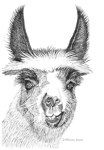 A pen and ink drawing of a young llama with a crooked mouth by Leslie Moore of PenPets.