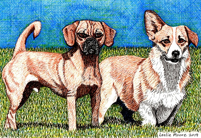 a colored pen and ink drawing of a Puggle and a Corgi by Leslie Moore of PenPets