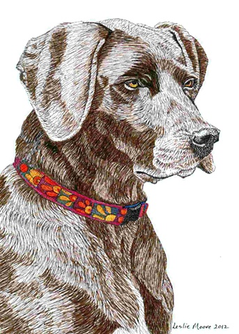 A colored pen-and-ink drawing of a German short-haired pointer by Leslie Moore of PenPets.