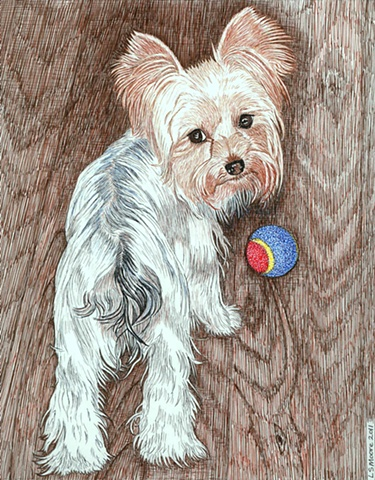 Teacup Yorkshire Terrier, colored pen and ink drawingby Leslie Moore