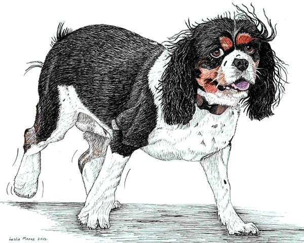 a colored pen and ink drawing of a Cavalier King Charles spaniel by Leslie Moore of PenPets
