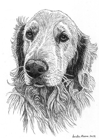 pen-and-ink drawing, dog drawing, Golden retriever, dog art, PenPets, Leslie Moore