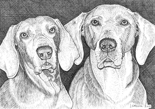 two Weimaraner dogs, male and female, pen and ink drawing by Leslie Moore