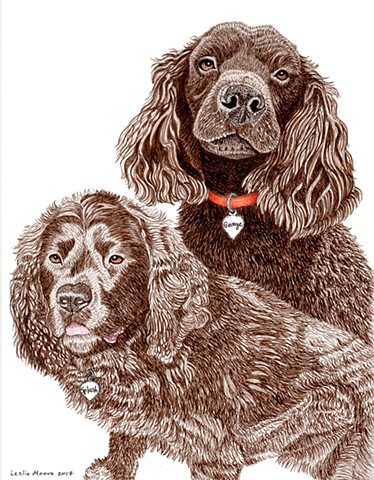 a colored pen and ink drawing of two American Water Spaniels by Leslie Moore of PenPets
