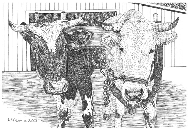 A pen and ink drawing of a team of oxen by Leslie Moore of PenPets.