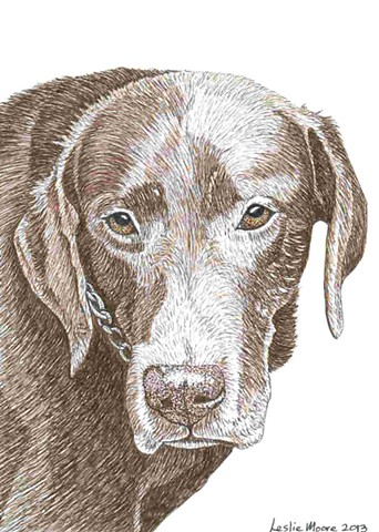 a colored pen and ink drawing of a chocolate Labrador retriever by Leslie Moore of PenPets