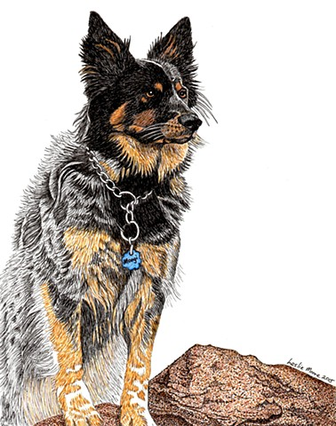 a colored pen and ink drawing of an Australian cattle dog by Leslie Moore of PenPets