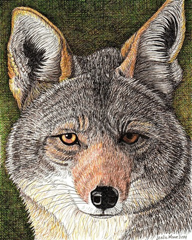 a colored pen and ink drawing of a coyote's head by Leslie Moore of PenPets
