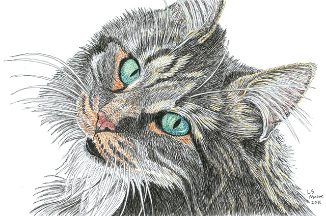A colored pen and ink drawing of a Maine coon cat by Leslie Moore.
