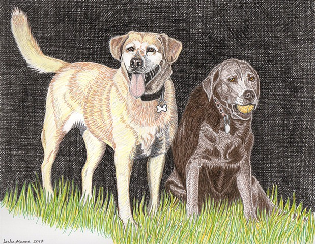 a colored pen and ink & colored pencil drawing of two Labrador retriever s--a yellow and a silver--by Leslie Moore of PenPets