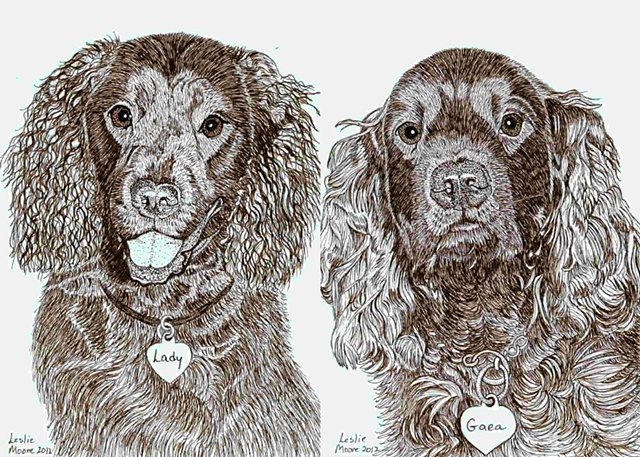 A colored pen and ink drawing of two American Water Spaniels by Leslie Moore