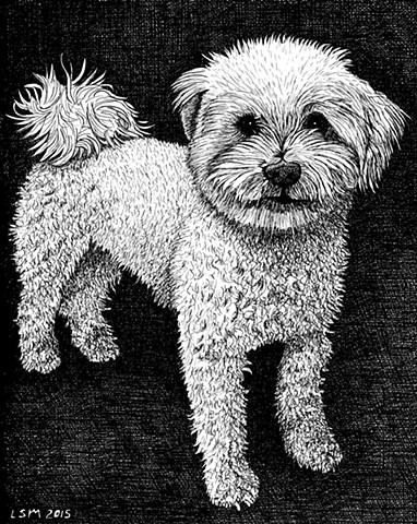 A pen and ink drawing of a Bolognese by Leslie Moore of PenPets.