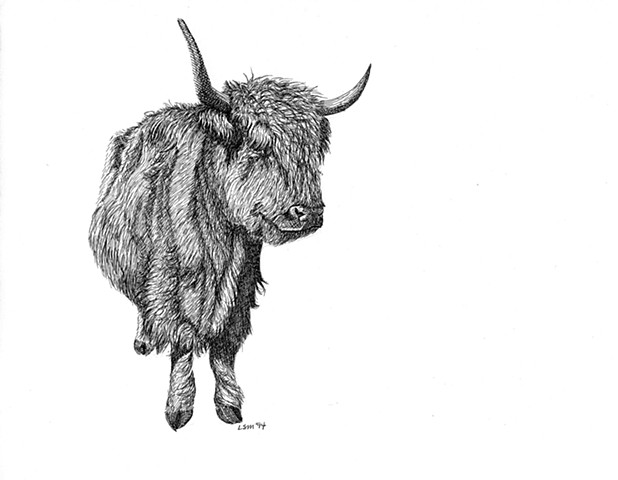 A pen and ink drawing of a Scotch Highland cow by Leslie Moore of PenPets.