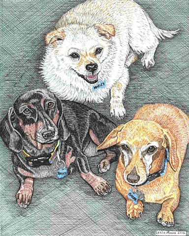 A colored pen-and-ink drawing of two Dachshunds and a white terrier mix by Leslie Moore of PenPets.