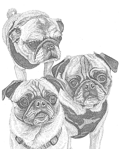 A pen and ink drawing of three pug dogs by Leslie Moore.