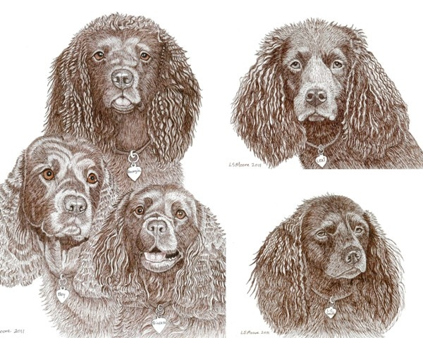 A colored pen and ink drawing of five American Water Spaniels by Leslie Moore