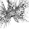 Lion Fish Drawing - Direct Front View