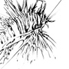 Lion Fish Drawing - Rear 3/4 View