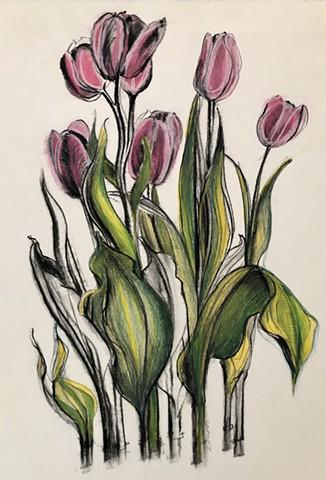 Pink Tulips  Elena Kubler