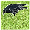 Crow in Grass #2