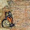 Monarchs Realm
