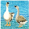 Two Geese #2
