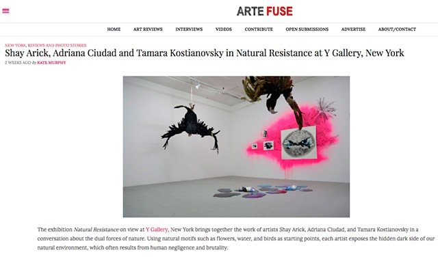 Arte Fuse Reviews Natural Resistance at Y Gallery