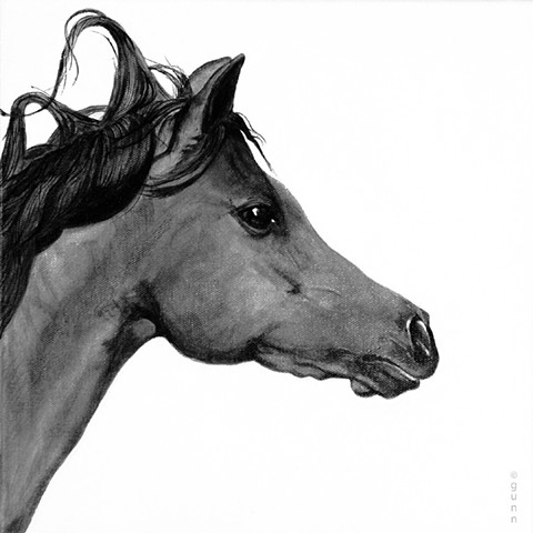 Arab horse. Arabian horses. Arabs. Horses.Black and white. Decor. Interior designers.