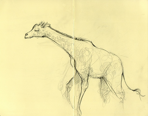 Zoo Sketches II