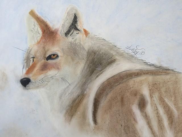 Bob The Coyote
