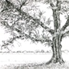 Elm, East Potomac Park