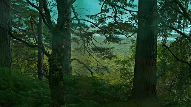 Caledonian Pines