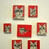 Miniature Tabby Portraits