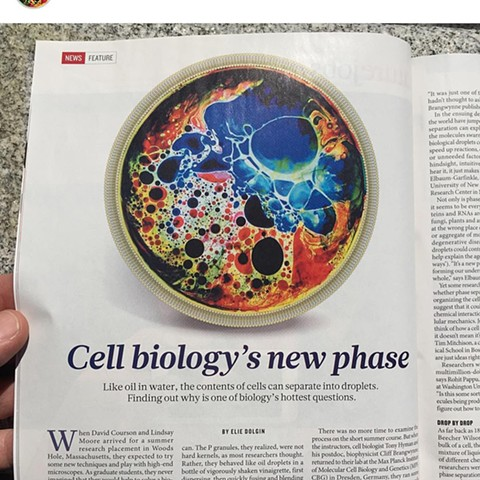 Nature - Artwork for feature story on Cellular Phase Separation