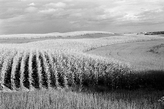 Corn, Near  Evansville, Minnesota, 2009
