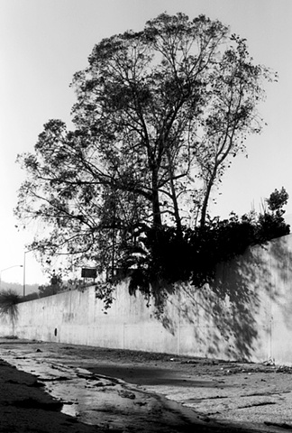 LA River, Tree, Near the Hollywood Freeway, 1998