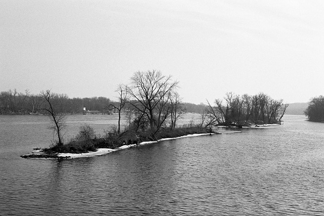 Mississippi River, Old Farmstead Windbreak, 2008