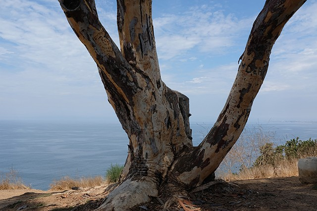 Tree (After Hiroshige), Rancho Palos Verdes Estates