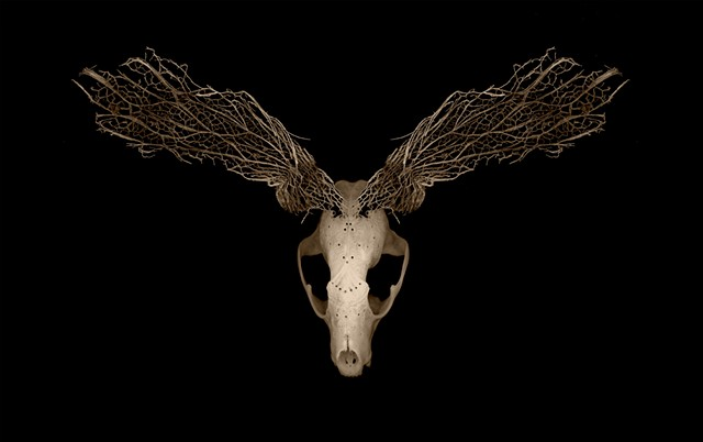 Muse of the Dust (Jason Borders Racoon Skull, Cactus Skeleton)
