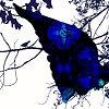 Long Blue Wind