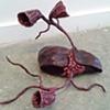 Liver Flower