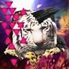 tigercrow