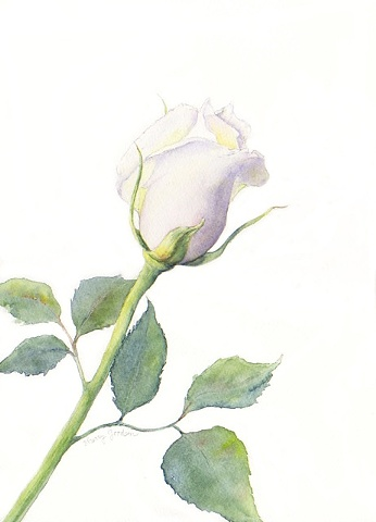 Taylor's Rose