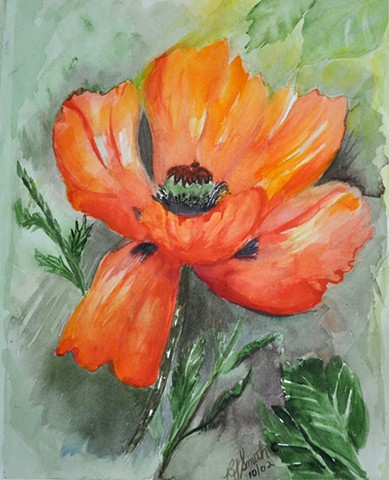 Poppy  by Betty Smith