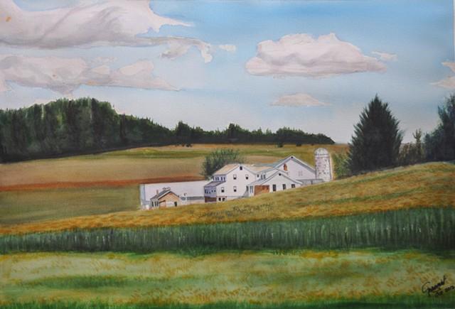 Amish Cornfield