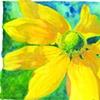 Lauren's Flower