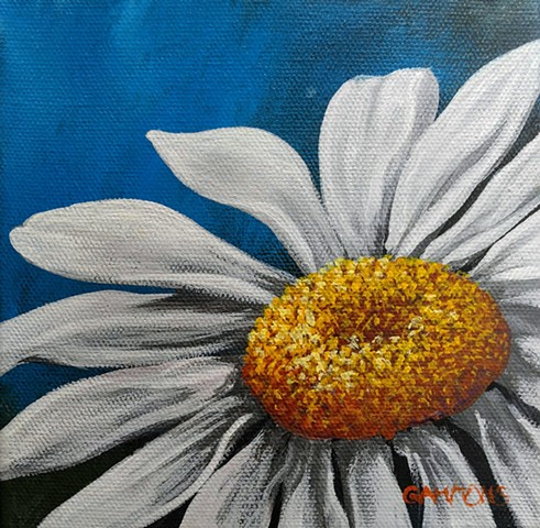 daisy blue shasta white flower #lauragammonsstudios laura gammons @lauragammons #camplaura #lauragammons