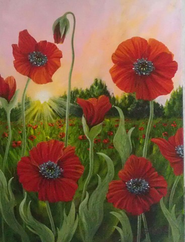 poppy emerald isle cape carteret DOT wildflowers NC red pink
